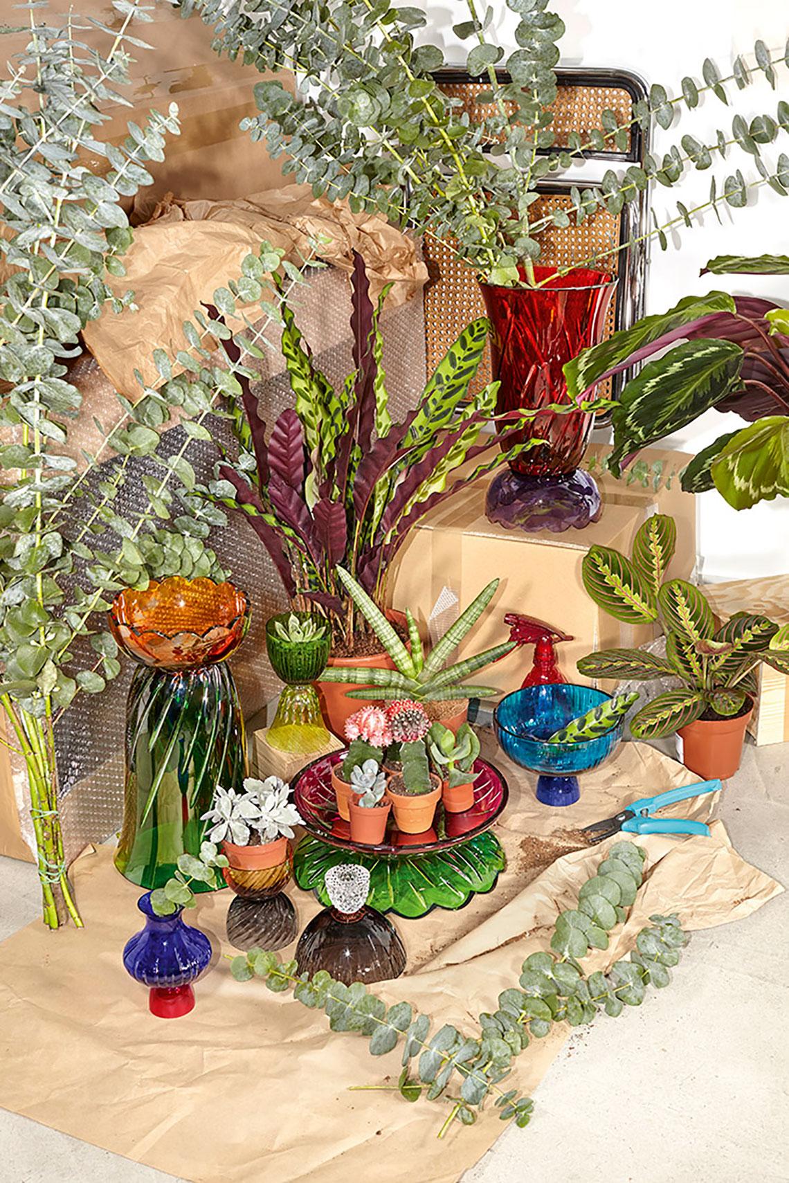 armellelalo-saint-louis-nathalie-mohadjer-plantes